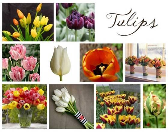 tulipboard